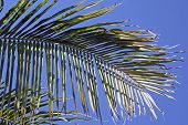 Palm Tree Leaves Blue Sky