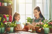 Cute child girl helps her mother to care for plants. Mom and her daughter engaged in gardening near  poster