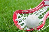 foto of lax  - Girls lacrosse head and grey ball on grass
