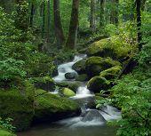 mossy cascade waterfall