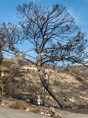 Malibu After Woolsey Fire Burnt Landscape In California poster