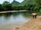 One Lone Elephant By Itself By The Khwae Yai River At The Elephant World Sanctuary Outside Of Kancha poster