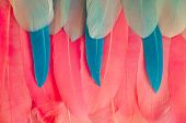 Multi Colored And Colorful Tropical Feather Background. Background From Feathers Of Tropical Birds.  poster