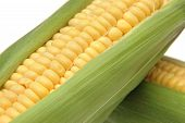 Corn In Cob 3