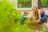 Beautiful Young Woman And Her Cute Son Planting Seedlings In Bed In The Domestic Garden At Summer Da poster