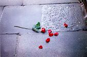 Roses On Stone