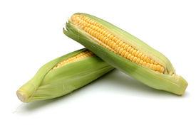stock photo of sweet-corn  - 2 corn on cob - JPG