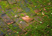 Bakstenen vloer achtergrond met bladeren en mos