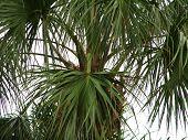 Palma planta hojas de la palma en miami