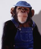 Farmer Chimp