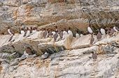 Seabirds On A Nesting Island