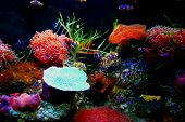 image of underworld  - Underworld animal with a lot of corals and cartoon fish - JPG