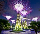 Night view of The Supertree Grove at Gardens by the Bay