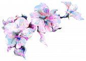 Flower Petunia sketch bouquet
