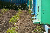 pic of beehive  - Blue beehives in garden during the time of pollination - JPG