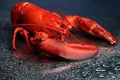 stock photo of cooked blue crab  - Red lobster on blue background - JPG