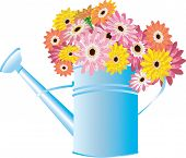 Blue Watering Can With Flowers