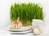 Healthy Food - Garlic And Germinated Wheat Seeds