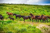 Horses Herd Running On Green Valley In Mountains Rural Landscape Farm Animals