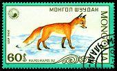 Vintage  Postage Stamp. Vulpes,  (red Fox).