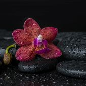 Spa Concept  Of Deep Purple Orchid (phalaenopsis) With Bud On Zen Stones With Drops, Closeup