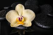 Beautiful Spa Concept  Of Yellow Orchid (phalaenopsis), Zen Stones With Drops On Reflection Water, C