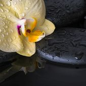 Beautiful Spa Set Of Yellow Orchid (phalaenopsis), Zen Stones With Drops On Reflection Water, Closeu