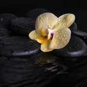 Spa Set Of Yellow Orchid (phalaenopsis), Zen Stones With Drops On Ripple Reflection Water, Closeup