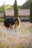 woman in lavender field smelling blooms in early morning