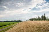 stock photo of dike  - Many sheep walking away on a dike with yellowed grass in the early summer season - JPG