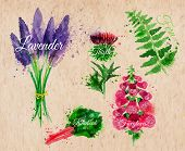 Flower grass lavender, thistle, foxgloves, fern, rhubarb kraft