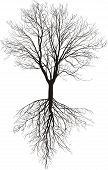Bare Tree With Roots.eps