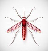 image of gnats  - One isolated mosquito - JPG