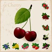 Vector berries vintage collection.