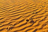 Human footprints on Sahara sand dunes.