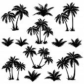 stock photo of jungle exotic  - Set tropical palm trees with leaves - JPG