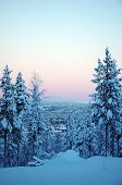 pic of laplander  - beautiful Lapland winter forest with view to horizon - JPG