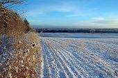 Snowy Dotted Field On Winter Landscape