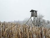 Wooden deer blind in the middle of the corn field