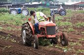 Restored Vintage Farm Tractor Ploughing Field For Planting