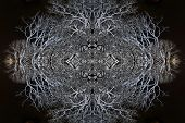 Negative Mirror Image Trees