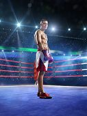 picture of knockout  - Professionl boxer is standing on the grand arena - JPG