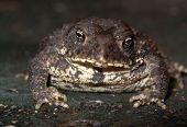 Toad Portrait