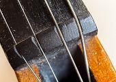foto of violin  - Macro view on violin strings and violin body. ** Note: Shallow depth of field - JPG