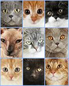 Cute cat faces collage