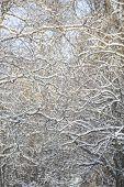 Full Frame of winter branches