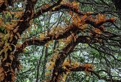 stock photo of epiphyte  - Epiphytes in autumnal colors - JPG