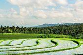 green fields in Indonesia