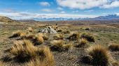 Wonderful hiking at Lake Tekapo viewing over to New Zealand's massive Alp mountains.