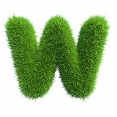 Letter w of green grass